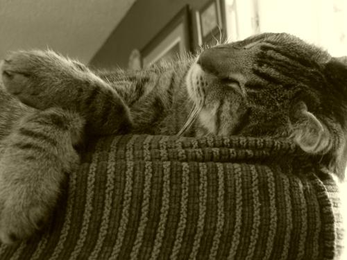 Skippy's Sleeping Positively