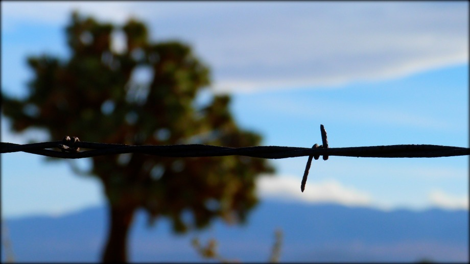 Joshua Tree and Barbed Wire
