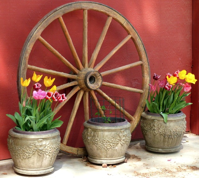 Tulips and Wagon Wheel